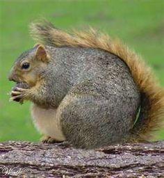 Fat squirrel!  Omg