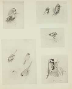 1 - A naturalist's sketch book / - Biodiversity Heritage Library