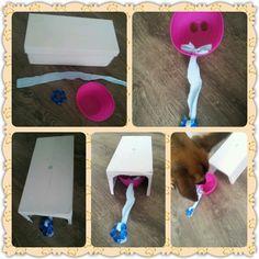 Spel 9 (hondenspel hond spel denkwerk hersenwerk brain dog game play diy) www.facebook.com/denkspellenvoorjehond