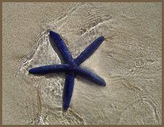 They were EVERYWHERE in Rarotonga, NZ. - made me giggle cos raro isnt nz hahaha Summer Time, Happy Summer, Life Under The Sea, Flotsam And Jetsam, Shell Beach, Sunny Beach, Going On Holiday, Ocean Life, Marine Life