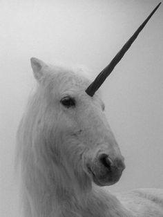 d32201fe78f5 138 Best Unofficially Unicorned <3 images   Unicorns, Real unicorn ...