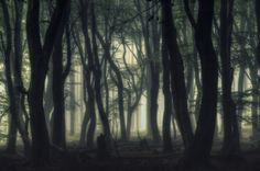 The dark and creepy forest by Jan Paul  Kraaij on 500px