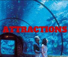 Attractions Attraction Tickets, Movies, Movie Posters, Film Poster, Films, Popcorn Posters, Film Books, Movie, Film Posters