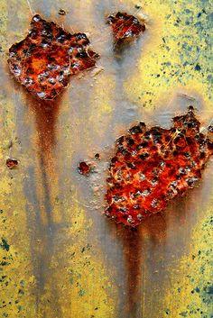 Weeping Sores, by Paula Bailey