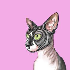 I made this drawing on the Procreate app to try out techniques for teaching students. It is of my Sphynx cat Sam