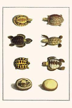 Three Keeled Land Tortoise, Star Tortoise, green Turtles & Egg