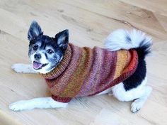 Proud Puppy Dog Sweater - Knitting Kit includes Yarn & Pattern!