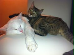 Ne sont ils pas mignons :) Look how they're cute !