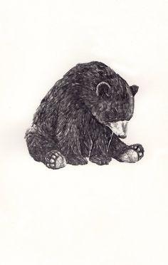 Imagem de bear, drawing, and animal