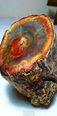 Petrified wood | #Geology #GeologyPage Geology Page www.geologypage.com