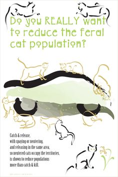 Humanely controlling feral cat populations -- trap, neuter, return (TNR) does work.