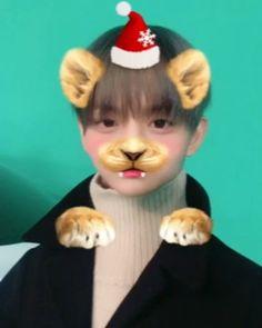 "Wanna One 워너원 (@wannaone.official) trên Instagram: ""[#배진영] 워너블에게 보내는 진영이의 크리스마스 인사 영상이 도착했습니다  진영이의 크리스마스 인사 영상과 함께 행복하고 즐거운 크리스마스 보내세요❤️ …"""