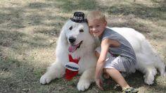 Пиренейская горная собака по кличке Дюк в третий раз была избрана мэром небольшого городка Корморант в штате Миннесота, сообщают местные СМИ.  Телеканал WDAY 6 отметил, что в первый раз Дюк был избран мэром в 2014 году. В ходе выборов, на которых проголосовало всего 12 человек из 1 тыс. жителей городка, собаку вписали в бюллетень, что не противоречит местному законодательству. Телеканал подчеркнул, что у Дюка высокий рейтинг среди горожан.  «Не знаю никого, кто бы мог стать его соперником…