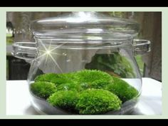 Moss For Sale | Buy Moss Online | Live Moss Wholesale