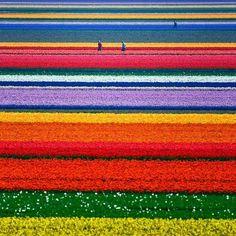 Netherlands.