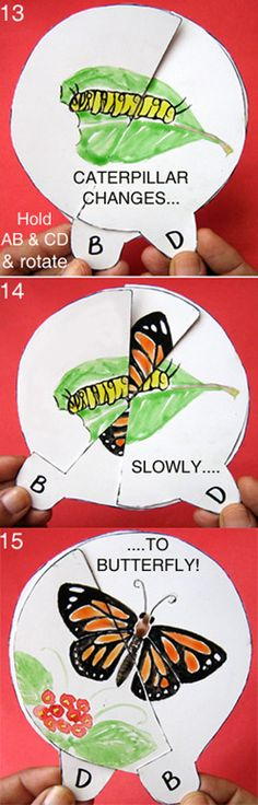 @Rossana Fonseca. i think this is what you were thinking of doing. butterfly, caterpillar transformation wheel