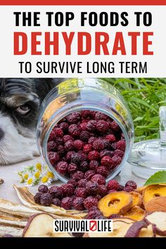 Whether you're a prepper or just a practical person, it pays to know the best foods to dehydrate. Dehydrated foods last longer and having these in your arsenal is a wise move. It's best to be always prepared especially in our current economy. #fooddehydration #dehydrate #survivalfood #survival #survivallife Survival Life, Survival Food, Survival Prepping, Emergency Preparedness, Food Storage Organization, Food Storage Containers, Long Term Food Storage, Dehydrated Food, Food Hacks
