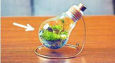 If you want to add some small plants to your home but you do not have time to water and take care of them not to mention clean up soil that leaks out of pots when you water them an eternal terrarium can be a good solution for you.