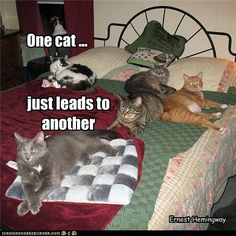 Cute Cat Pictures with Sayings | Cats Quotes and Cute Cat Pictures | Cool Cat Pictures and Videos