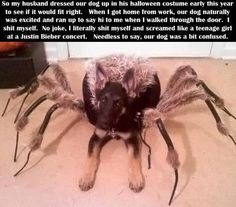 Halloween dog...I would drop dead of a heart attack if I saw this walking down the street and I'm really not kidding.