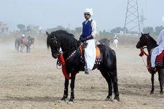Ali Hajveri Tent Pegging Club: Shahid Irfan MalwanaM.Irfan Malwana