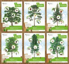 Die Poster zur Waldfibel - Unser Waldkulturerbe