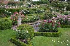 David Austin English Rose Garden (click to see larger)
