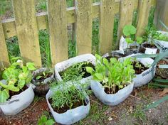 Aprende paso a paso este método sencillo que utiliza envases reciclados para hacer germinar tus semillas rápidamente y disfrutar de las flores en primavera.