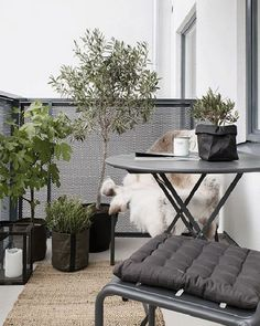 Small-balcony-furnishing-styling-interior-small-balcony-design-styling-balkonmöbel-möbel-balkon-design-klapptisch – l e o n o r e – diy - Balkon Ideen 2020 Small Balcony Design, Tiny Balcony, Outdoor Balcony, Outdoor Decor, Balcony Ideas, Balcony Gardening, Modern Balcony, Outdoor Plants, Potted Plants