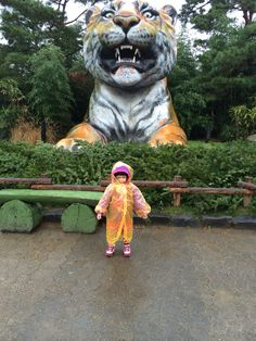 Rainny day. With tiger