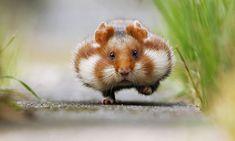 1. Un hamster très serieux sur une patte et un autre dans son petit bol