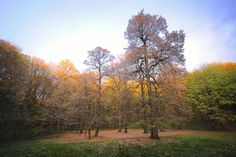 https://flic.kr/p/phJpo7 | Trees | Autumn and trees at Fruska gora National park, Vojvodina, Serbia