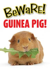 Guinea Pig Gifts -