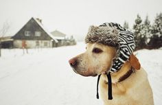 How Cold Is Too Cold For A Dog? | petMD