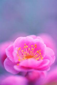 #pinkflorals #trending #flowers #camillelavie
