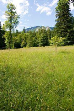 A field at Schloss Londerhof reminiscent of the Sound of Music. Bavaria, Germany; Bayern, Deutschland.