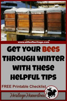 These 6 tips to winterizing bee hives will give you and your bees the boost they need to get through the winter months into spring and blooming flowers! Save The Bees, Bee Hives, Honey Bees, Bees Knees, Busy Bee, Tiny Houses, Alpacas, Winter Flowers, Winter Months