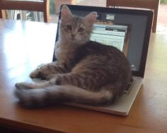 The Cat in the Lap (top) - with apologies to Dr Seuss or ; If Cats Could Read