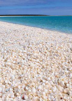 Shark Bay, Western Australia