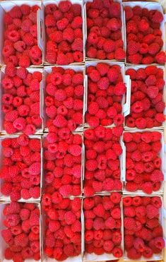i love raspberries (more than any other food. more than ice cream, even). must grow them for endless supply...