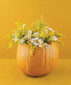 yellow flowers in pumpkin