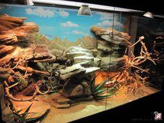 Mise en place de faux rochers pour réaliser des grottes et des plateformes. Il s'agit d'un terrarium dédié aux reptiles vivants dans les milieux arides et rocailleux.