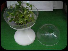 Large Terrarium, Glass Terrarium, House Plants, Garden, Memories, Memoirs, Souvenirs, Indoor House Plants, Lawn And Garden