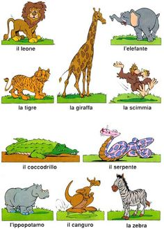 Learning Italian - Animali
