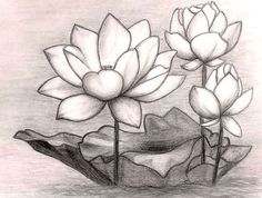 Realistic-Color-Pencil-Flower-Drawings.jpg 1,024×774 pixels