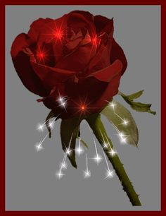 Animated Gif by Kevin and Amanda Kennedy Picsart, Roses Gif, Beautiful Rose Flowers, Happy Birthday Quotes, Rose Wallpaper, Diy And Crafts, Bouquet, Sparkle, Floral