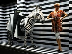 zebra crossing,pinned by Ton van der Veer