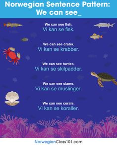 Norwegian Sentence Pattern: We can see - Thai Phrases, Norway Language, Grammar Tips, Learn Turkish, Turkish Language, Coral, Norway Travel, Learn A New Language, Budapest Hungary