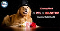 Post yours & Your Pet pictures in the comment section with the #timeforpet #mypetmyvalentine #Contest #Bangalore
