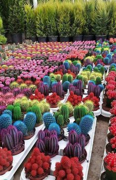 Best Cactus Landscaping Ideas and Pictures 23 - Awesome Indoor & Outdoor Succulent Gardening, Cacti And Succulents, Planting Succulents, Cactus Plants, Garden Plants, Indoor Plants, House Plants, Planting Flowers, Indoor Outdoor